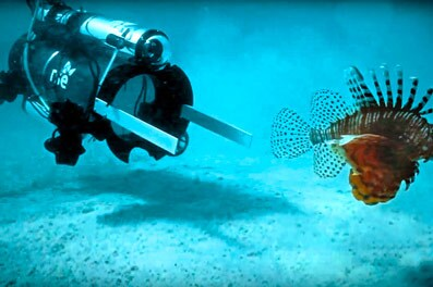 Undersea robot is designed to vacuum up invasive lionfish