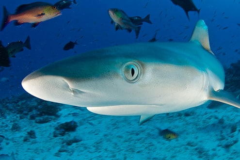 What sharks and Cisco's new network have in common