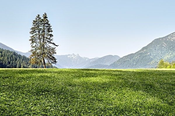 image of a field with mountains in the background